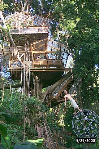 Five Tree Houses From Around The World That You Could Live In - Contemporary banyon treehouse california